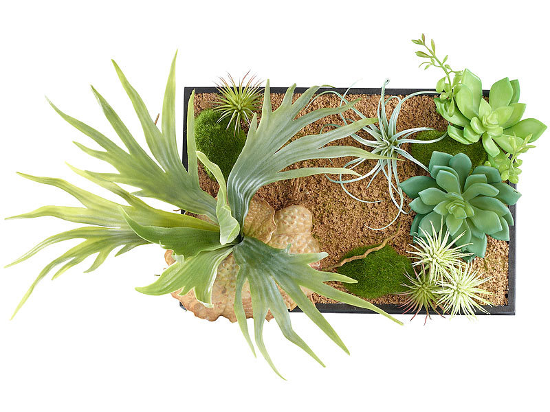 carlo milano wandbild vertikaler wandgarten lisa mit deko pflanzen 20 x 30 cm pflanzen bilder. Black Bedroom Furniture Sets. Home Design Ideas