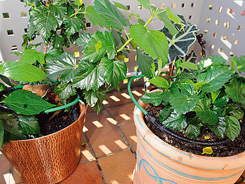 royal gardineer pflanzen bew sserungs system f r balkon terrasse und gew chshaus. Black Bedroom Furniture Sets. Home Design Ideas