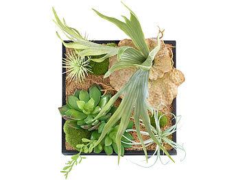 Carlo milano vertikaler wandgarten lena mit deko pflanzen 20 x 20 cm - Vertikaler wandgarten ...