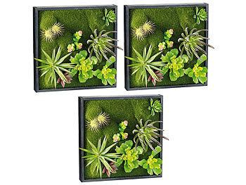 Carlo milano vertikaler garten vertikaler wandgarten karl mit deko pflanzen 3er set pflanzen - Vertikaler wandgarten ...