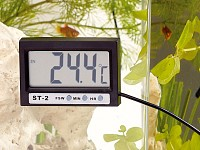 infactory Digitales Aquariums-Thermometer mit LCD-Uhr infactory Aquariums-Thermometer