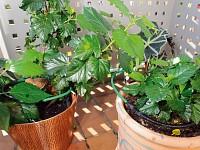 pflanzen bew sserungs system f r balkon terrasse und. Black Bedroom Furniture Sets. Home Design Ideas