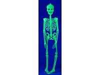 infactory Glow-in-the-<br />dark Halloween-Deko Skelett, 9...